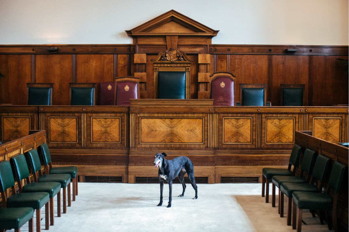 Town Hall Hotel Council Chamber dog