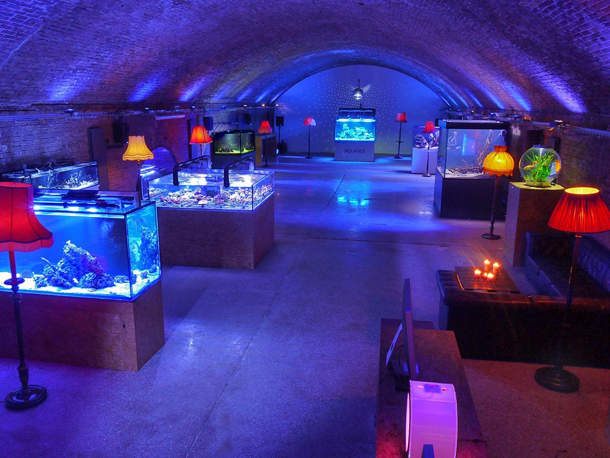 Dalston Fish Tank