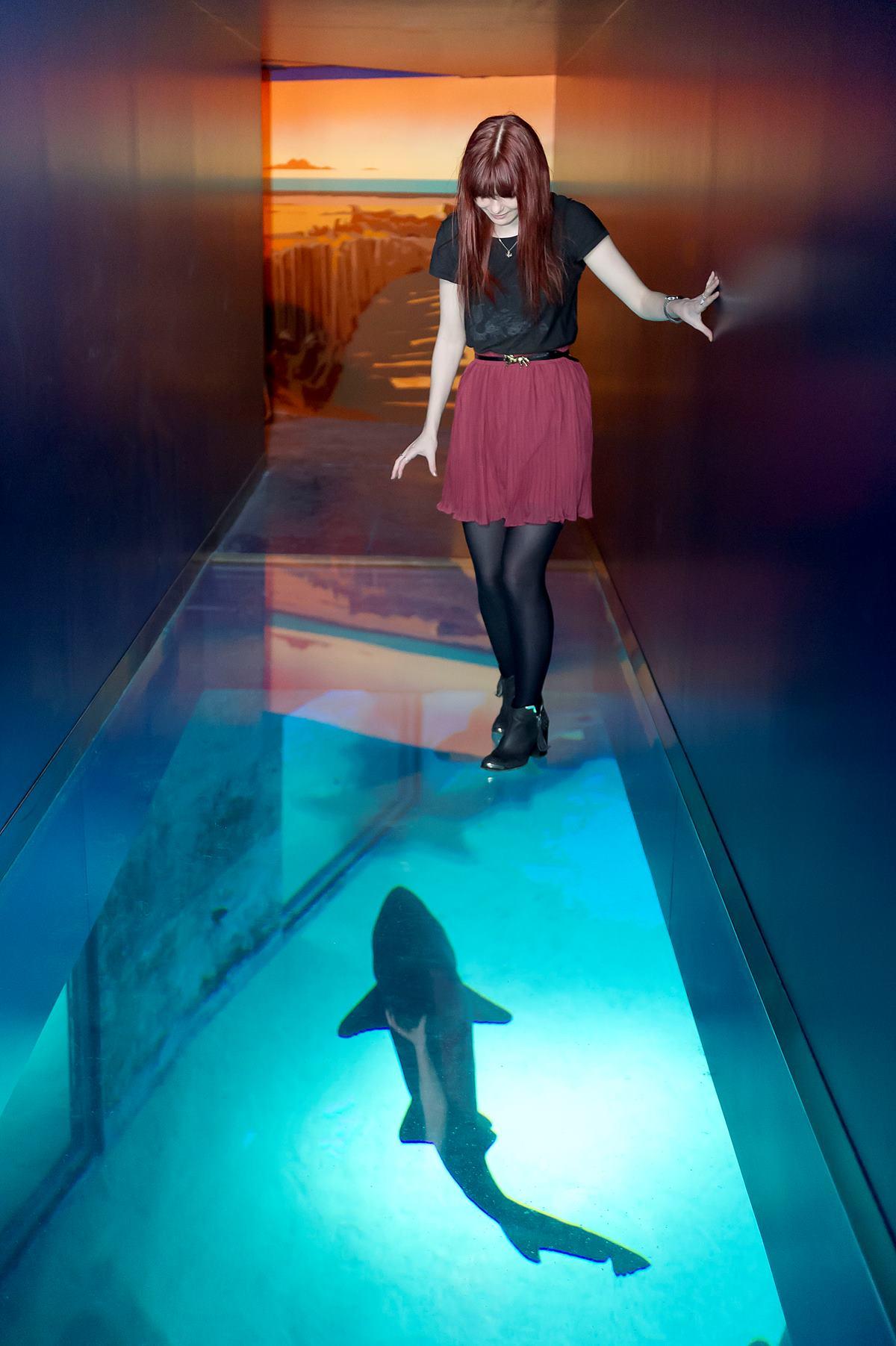 and photo sea aquarium